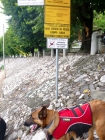 Spiaggia vietata ai cani